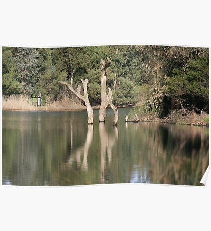 Winter wetland reflections,Mt. Barker, S.A. Poster