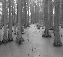 Bald Cypress Swamp by Deidra Scoggins