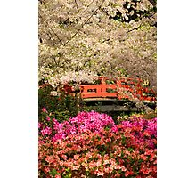 Red Bridge And Blossoms Photographic Print