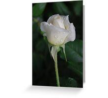 Resonance of Gentle Rain Greeting Card