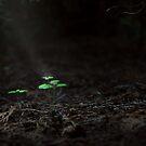 Ray of light by VallaV