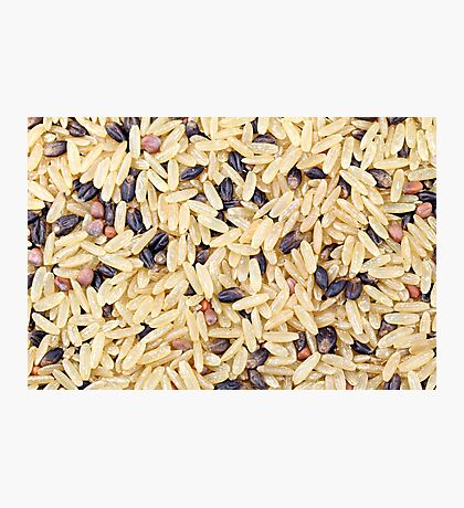 Wild Rice Photographic Print