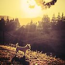 Westie on the hill by marcy413
