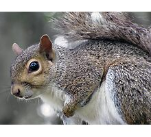 Sweet Lil' Squirrel Photographic Print