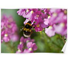 Garden bumble bee Poster