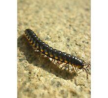 Millipede shadow Photographic Print