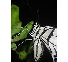 Butter-fly Photographic Print
