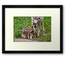 Timber Wolf And Pups Framed Print