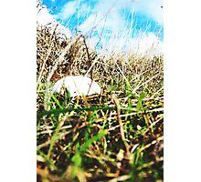 The Bluff Mush  Photographic Print
