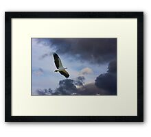 Solitary Hunting Framed Print