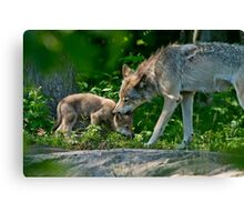 Timber Wolf And Pup Canvas Print