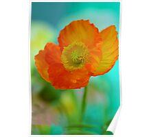 Impressionistic Poppy Poster