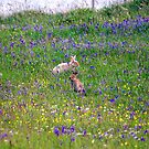 hares and bluebells by lukasdf