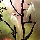 Roosting Egrets by Stephen Warren
