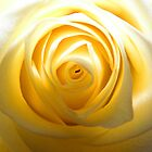 Yellow Rose by Christine Hosey