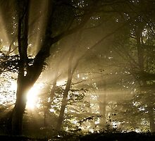 Ray of Light by Neil Cox