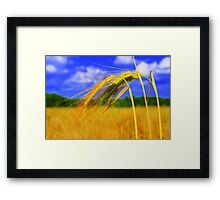 Barley Bright Framed Print