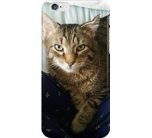 Feline staring contest iPhone Case/Skin