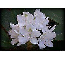 Flowering Mountain Photographic Print
