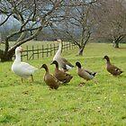 Goosey goosey gander by Paul Bech