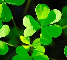 Green Clover Abstract by Christina Rollo