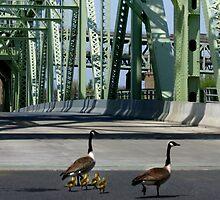 Navy Ducks by skycat