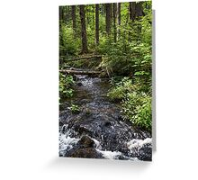 Down By the Stream Greeting Card