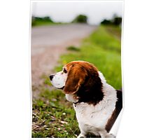 Country Pooch Poster