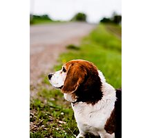 Country Pooch Photographic Print