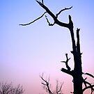 Light Abandons Tree with No Light by Erin  Sadler