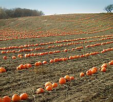 Pumpkin Patch by Stephen D. Miller