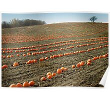 Pumpkin Patch Poster