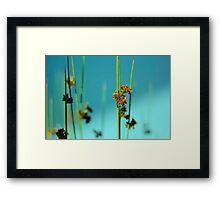 Blue Grass Framed Print