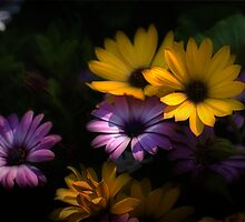 Delightful Daisies by Robin Webster
