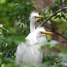 Young Egrets 271 by Brenda Loveless
