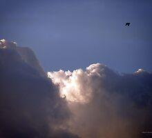 Solo Flight by AlbertStewart