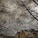 Pigeon over Pont neuf by Laurent Hunziker