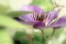 Clematis by aMOONy