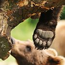 Paw & claws (bare foot) by Alan Mattison