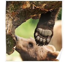 Paw & claws (bare foot) Poster
