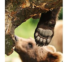 Paw & claws (bare foot) Photographic Print