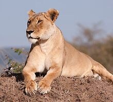 Mara Lioness by Sue Earnshaw