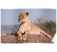 Mara Lioness Poster