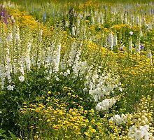Cedar Creek Farms Delphinium Field by Marilyn Cornwell