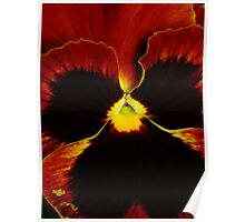 Rusting Pansy Poster
