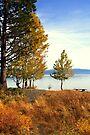 """A Fall Day At The Beach"" by Lynn Bawden"