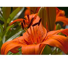 Picture of Lily Photographic Print
