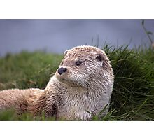 Otter Time Photographic Print