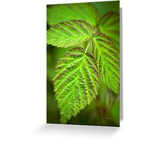 Fresh Green Leaf Abstract Greeting Card