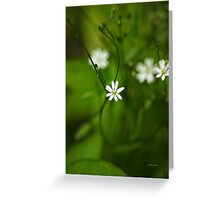 Chickweed Wildflowers Greeting Card